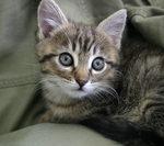 kitten-1388303
